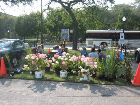 All of the flowers, plants and sod were donated by a generous landscaper.